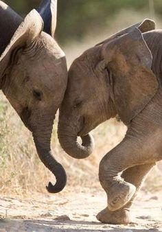 Elephant buddies.... elephants, anim, babi eleph, creatur, beauti, ador, smile, friend, thing