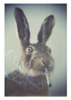 rabbit hole, rabbits, wonderland, funni, weed, alic, easter bunny, smoke, animal
