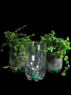 self watering planters from recycled soda bottles ~ diy