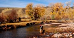 Fall fly fishing in the Uinta Mountains of Utah. Can't beat this time of year for beauty and big fish. #flyfishing #fishing #trout http://www.utflyfishing.com