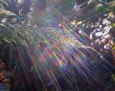 photographs, nature, light corner, natur photo, colors