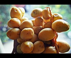 Dates, the staple food of the Mideast countries is a sweet dry fruit. Date palms or Phoenix dactylifera (scientific name) produce clusters of oval, dark reddish brown drupes, called dates below their fronds. Around 600-1700 clusters are present in a  How to find sexy women. Learn more on cougarsplace.com