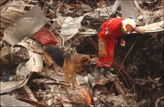 Don't forget the animal heroes of 9/11...I've read before that the animals felt a great sense of sadness when they couldn't find a human being alive, so their trainer's had to do a mock representation with a living human as a reward so they wouldn't become discouraged...