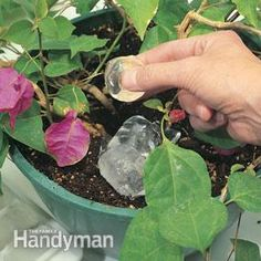 Simple. For hanging baskets in the summer heat. Use ice cubes. The plants have time to absorb the moisture they need, as the ice melts.