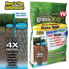 GRASSOLOGY | Taylor Gifts