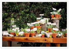 Potted succulents that can double as favors & escort cards are a total win!