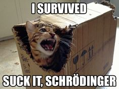 geek, funny cats, funny pictures, funni, boxes