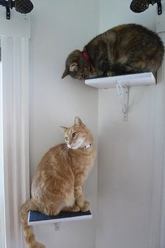 Build your own cat perches. | 26 DIYs Your Pet Will Totally Appreciate #animal #DIY #cats #dogs #home #love #pets #Malta #socialmedia HAVE YOUR SOCIAL MEDIA PROFILES LOOK LIKE MINE www.ICanDoThings.com
