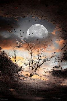 ✯ Magnificent Moonlight