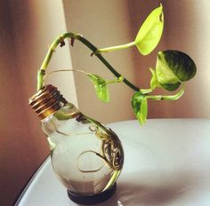 How to Recycle and Repurpose a Light Bulb