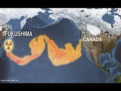 Wading Through The Waters Of Fukushima Daiichi