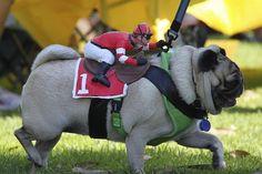 best leash...evah!!!!!