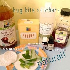 Natural Remedies to Soothe Bug Bitten Skin
