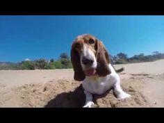 Beach o'Basset, The Sequel