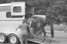 Self-Loading into a Horse Trailer
