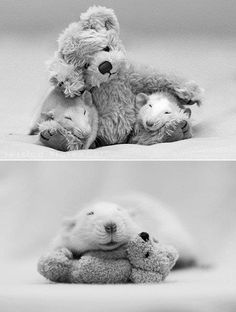 Cute baby rats with teddy bear