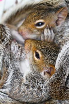 squirrels
