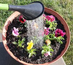 Planting Flower Pots 101