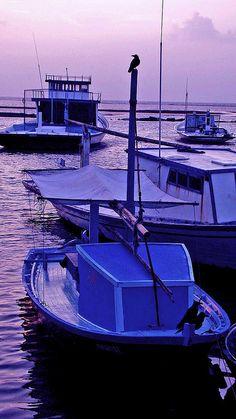 purple boats #SunorSinCity