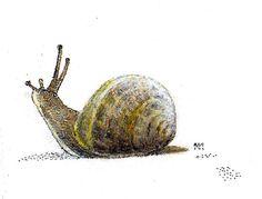 Snail - Oct '13