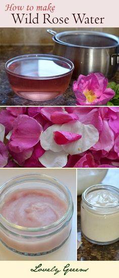 Making Wild Rose Water.