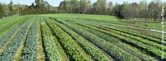 Chapel Hill in April is a colorful wonderland of blossoming flowers and bright green leaves. One of the best ways to celebrate Spring's renewal is to visit our local farms by taking the 17th Annual Piedmont Farm Tour! http://www.chapelhillrecorder.com/farmtour/