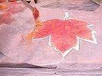 Poleigh's maple leaf with PearlEx.  #Polymer #Clay #Tutorials