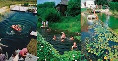 8 Reasons Why Natural Swimming Pools Are Awesome! http://themindunleashed.org/wp-content/uploads/2014/07/8-reasonss.jpeg