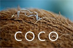 #Art  #Photography  #Macro  #kitchen decor  #food photography  #kitchen art print  #farm market finds  #haya gold  #farm market #kitchen art  #teamt  #fine art #photography  #coconut # coconut photogrpahy  #alex atlas  #macro #photogrpahy