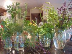 growing herbs in winter