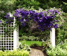 Arbor and clematis