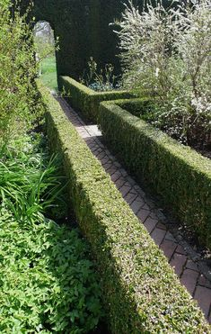 Boxwood pruned tightly at Sissinghurst by Kendra Wilson via Gardenista
