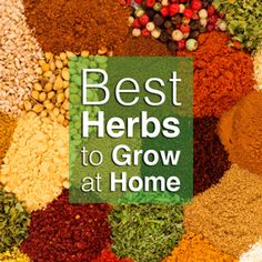Learn to concoct simple home remedies with these easy-to-grow medicinal herbs.