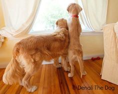 Denali and Sir Wilbur - DenaliTheDog.com