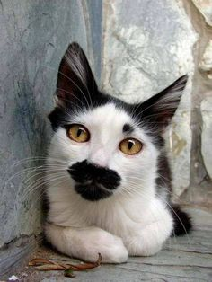 moustach, kiss, cat, lipstick