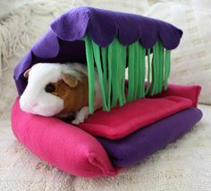 Flippin' Fun Futon, available at www.GuineaPigMarket.com!