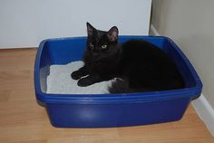 Homemade Kitty Litter - All Natural & Good