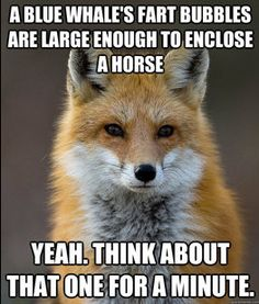 Fun Fact Fox.... I may have laughed a little too hard at this