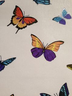 B q a w press show 2013 on pinterest contemporary for Flutterby wallpaper