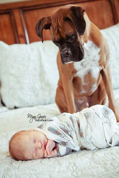 """We're keeping him?""  Beautiful idea including the family pet in your #newborn #photoshoot #familyphotos new babies, watch dogs, boxer, newborn with dog photo, newborn photos, newborn pics, baby pictures, puppi, kid"