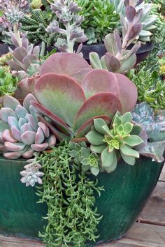 Beautiful container succulents.