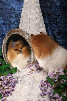 Pomeranian dry skin