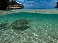 Sea turtle...Art & Water