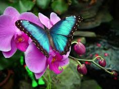 butterfly & orchids