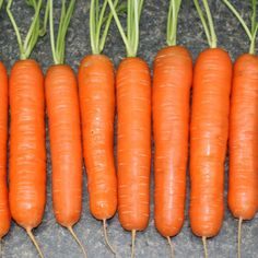 Yaya Carrot Seed - High Mowing Organic Seeds