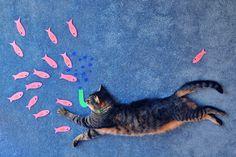 Cat Go Fishing
