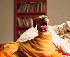 Fleese Doggy Snuggies?