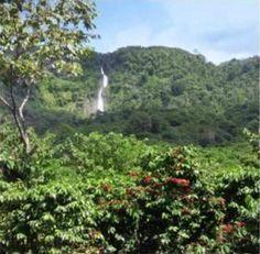 Guatemala Coffee Farm