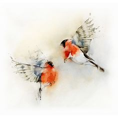 birds,watercolor,watercolor,birds,bird,art,feathers-672dbfd2dcb4a710572112c6a039cc97_h.jpg 500×500 pixels