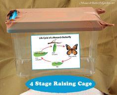 Four Stage Raising C